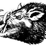 boar5